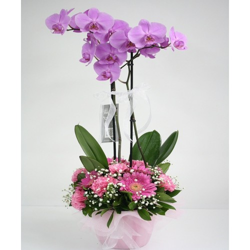 Çift dal pembe&lila orkide aranjman