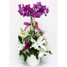 Çift dal mor orkide & zambak aranjman