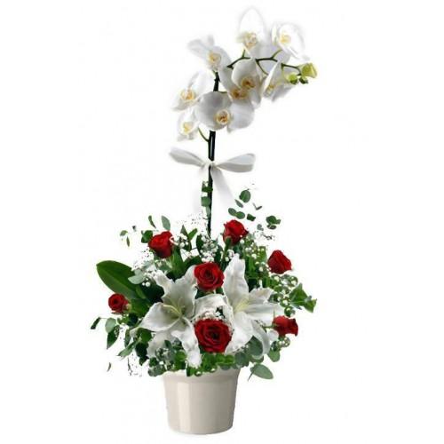 Beyaz Tek Dal Orkide Arajmanı
