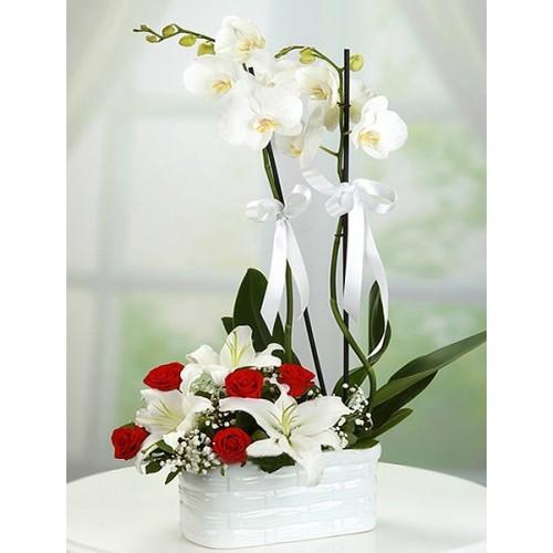 çift dal beyaz orkide arajman